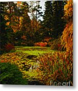 The Golden Pond Metal Print