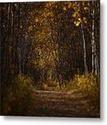 The Golden Road Metal Print by Stuart Deacon
