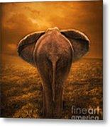 The Golden Savanna Metal Print by Lynn Jackson
