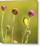 The Goldfinch Metal Print