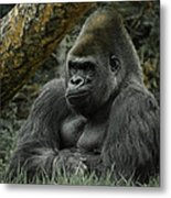 The Gorilla 3 Metal Print