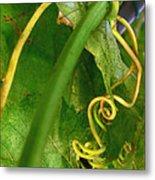 The Grape Vine Metal Print
