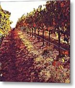 The Grapes Of The Wine Country Metal Print