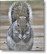The Gray Squirrel Metal Print