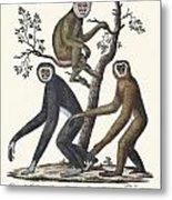 The Great Gibbon Metal Print