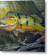 The Great Peacock Bass Metal Print by Terry  Fox