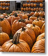 The Great Pumpkin Farm Metal Print by Peter Chilelli