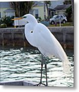 The Great White Egret Metal Print