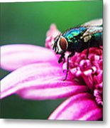 The Green Fly Metal Print