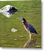 The Green Heron Metal Print
