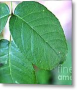 The Green Leaf Metal Print