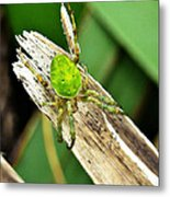 The Green Spider Metal Print