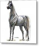 the Grey arabian horse 7 Metal Print
