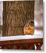 The Grey Squirrel George In Winter Metal Print