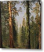 The Grizzly Giant Sequoia Mariposa Grove California Metal Print