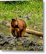 The Grizzly Metal Print