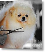 The Groomer Metal Print