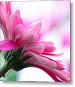 The Happy Flower Pink Daisy Metal Print