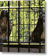 The Hawks From The Series The Imprint Of Man In Nature Metal Print