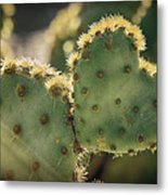 The Heart Of A Cactus  Metal Print