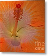 The Heart Of A Hibiscus Metal Print