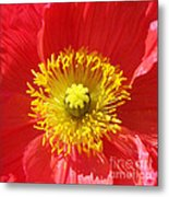 The Heart Of A Red Poppy Metal Print