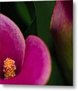 The Heart Of The Lily Metal Print by Christi Kraft