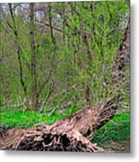 The Hedge Witch Metal Print