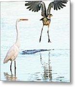 The Heron With The Bird Face Butt. Metal Print