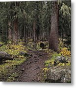 The High Forest Metal Print by Eric Glaser