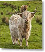 The Highland Dude Metal Print