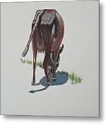 The Holy Cow And Dung 3 Metal Print