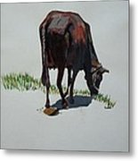 The Holy Cow And Dung. Metal Print
