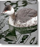 The Horned Grebe Metal Print