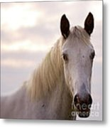 The Horse In The Setting Sun Metal Print