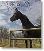 The Horse Trainer Metal Print
