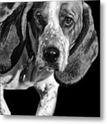 The Hound Metal Print by Camille Lopez