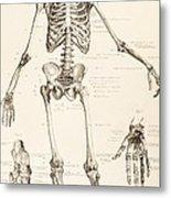 The Human Skeleton Metal Print