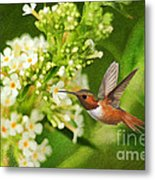 The Hummer And The Butterfly Bush Metal Print