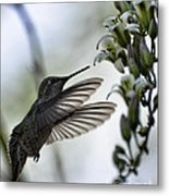 The Hummingbird  Metal Print