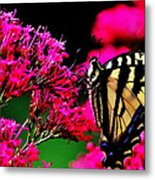 The Hungry Butterfly Metal Print