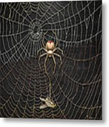 The Hunter And Its Pray - A Gold Fly Caught By A Gold Spider Metal Print