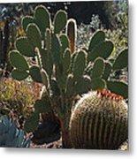 The Huntington Desert Garden Metal Print by Rona Black