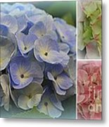The Hydrangeas Of Late Spring Metal Print