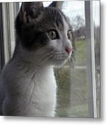 The Inquisitive Kitty Jackson Metal Print
