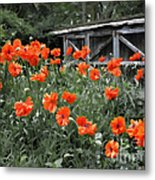 The Inspiration Of Orange Poppies Metal Print