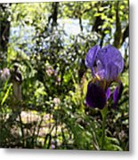 The Iris And St Francis Metal Print