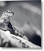 The Iron Lizard II Metal Print