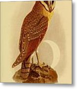 The Java Owl Cassell Metal Print