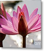 The Joyous Lily Metal Print
